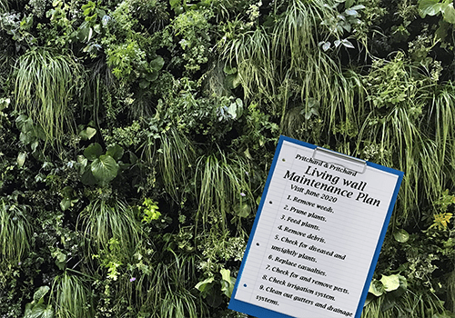 Image shows a modular green wall maintained by Prichard & Prichard with a clip board showing a maintenance plan.