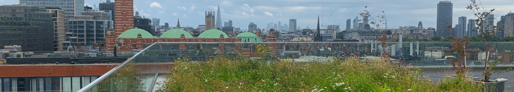 Header image shows a wildflower meadow roof maintained by P&P in Victoria London, looking south over Westminster, London.