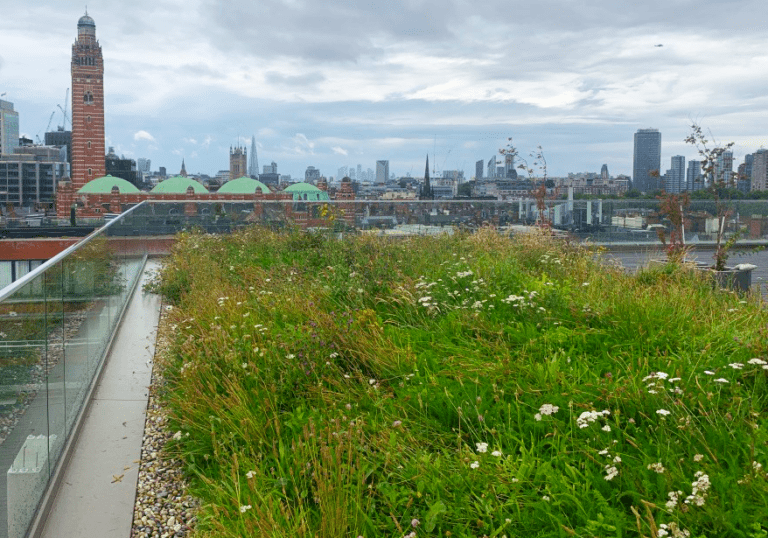 Image shows a wildflower meadow roof maintained by P&P in Victoria London, looking south over Westminster, London.