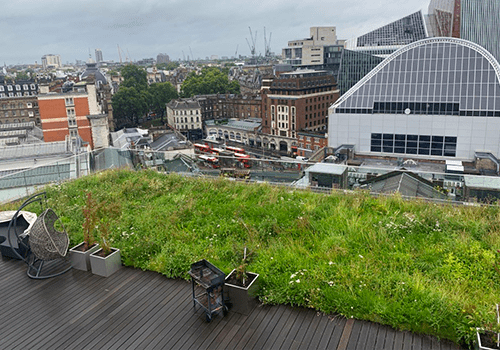 Images shows a wildflower meadow roof maintained by P&P in Victoria London, with a spectacular view over Victoria, looking towards central London.