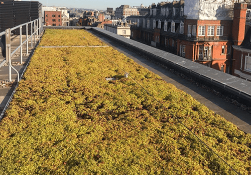 Image shows the sun catching roof of sedum, before lavender is planted by P&P's maintenance team.