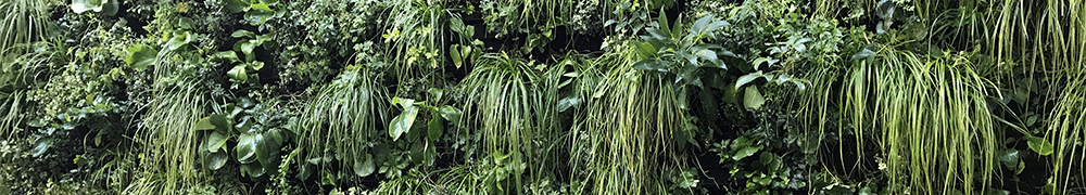 Close up image of a modular green wall at LSE, London, maintained by Prichard & Prichard. Header image for P&P's living wall FAQ.
