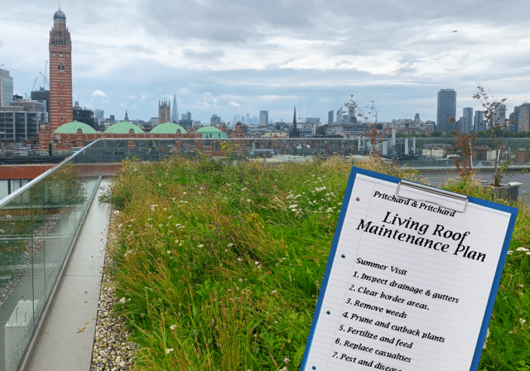 Image shows: a wild flower roof terrace, maintained by P&P in Victoria London, with a maintenance plan clipboard overlaid.