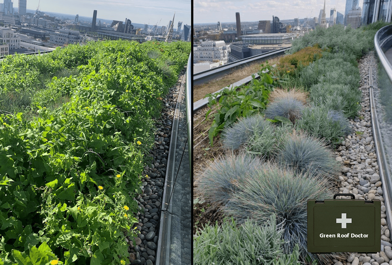 Image shows: a green roof high above the City of London before and after a P&P restoration. In the before photo it is all weeds, in the after photo it looks fabulous. An olive medical bag says Green Roof Doctor.