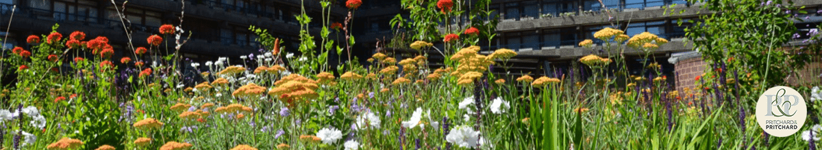 Header image shows: mixed planting at the Barbican gardens in London in bloom. Planting by Nigel Dunnet. Green infrastructure by Pritchard & Pritchard.