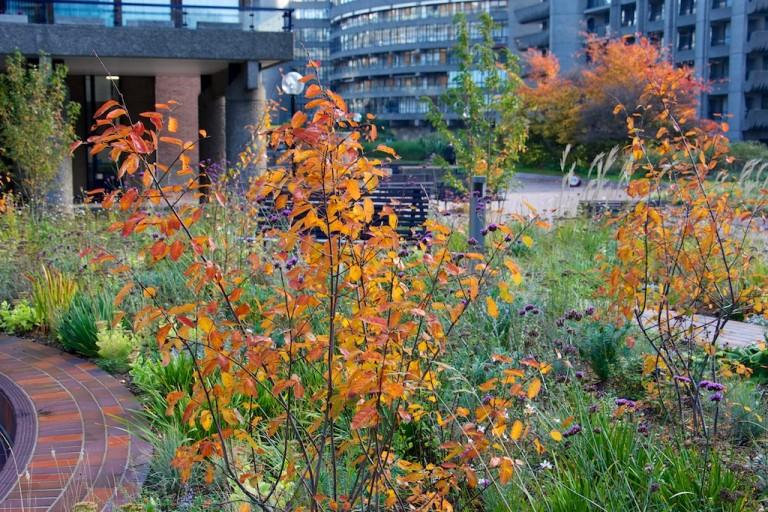 Barbican Podium Garden