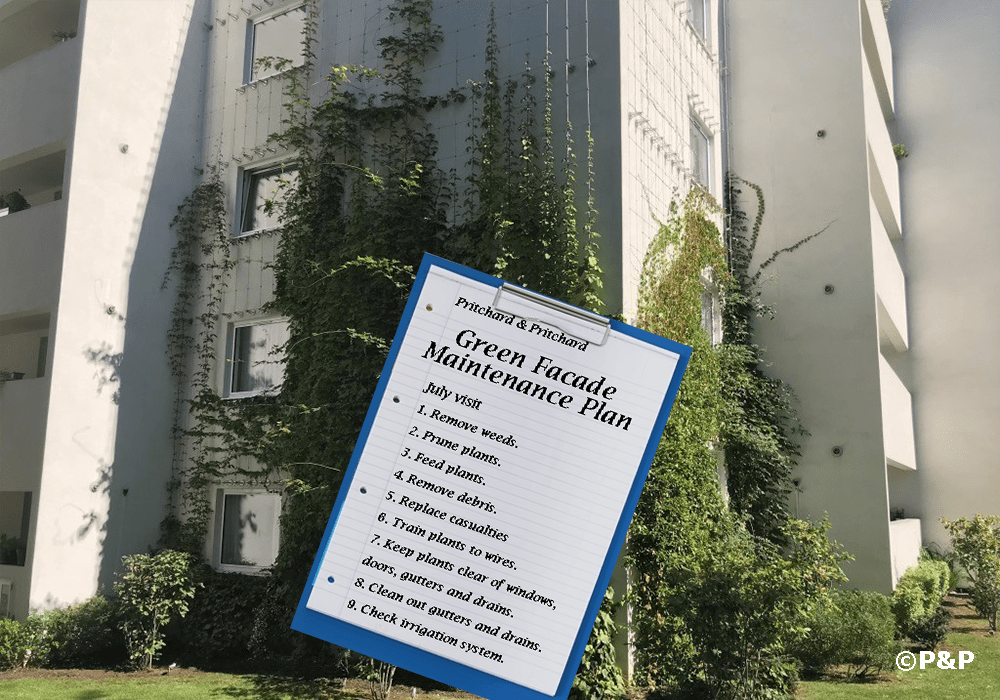 Image shows the green facade installed by Prichard & Prichard on a stainless-steel bar-and-wire-rope trellis on a residential building in Putney. A clip board shows a maintenance plan for a green façade.