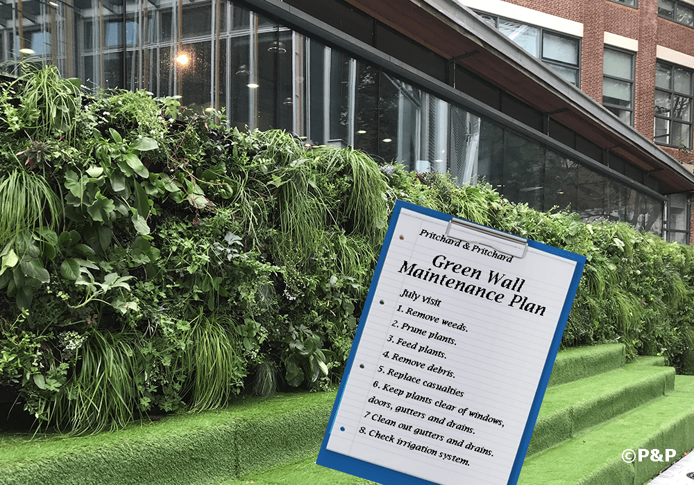 Image of a modular green wall at LSE, London, maintained by Prichard & Prichard. A clip board shows a maintenance plan for a green wall.