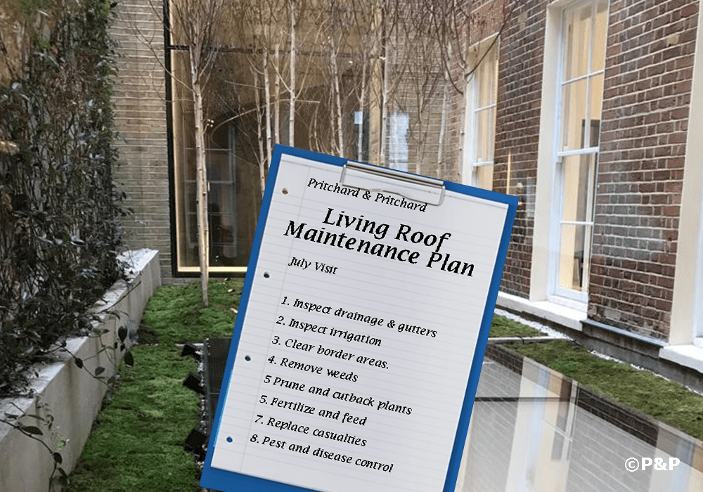 Image shows the podium garden at the central London Stella McCartney which is maintained by P&P. The garden contains birch trees, climbers and moss. A clip board shows a maintenance plan for a green roof.