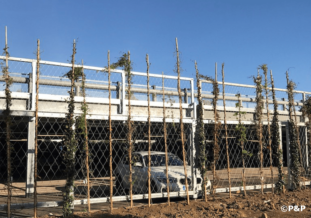Image shows climbers being planted on stainless-steel bar-and-wire-rope fence installed by the Prichard & Prichard green facade installation crew to mask a carpark at Hatfield.