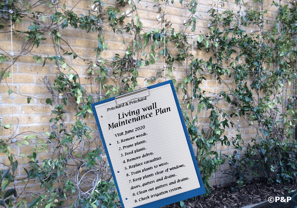 Image shows the green facade installed by Prichard & Prichard on a stainless-steel bar-and-wire-rope trellis on a residential building. A clip board shows a maintenance plan for a green façade.