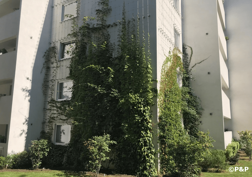 Image shows the green facade installed by Prichard & Prichard on a stainless-steel bar-and-wire-rope trellis on a residential building in Putney.