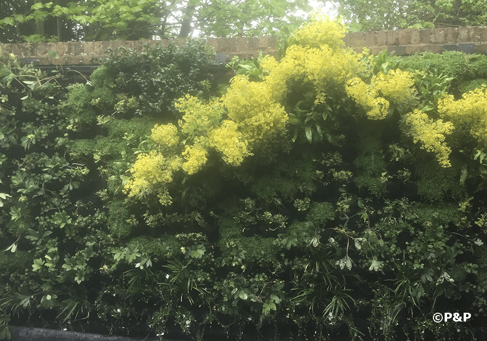 Image shows a green wall disguising an old wall in Kew, London.