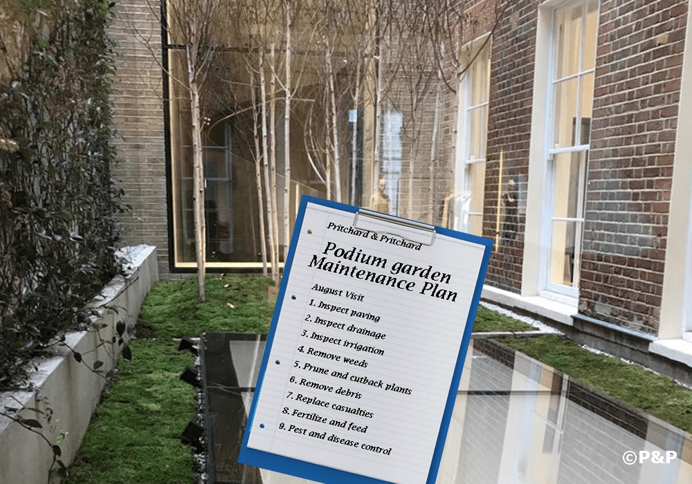Image shows the podium garden at the central London Stella McCartney which is maintained by P&P. The garden contains birch trees, climbers and moss.