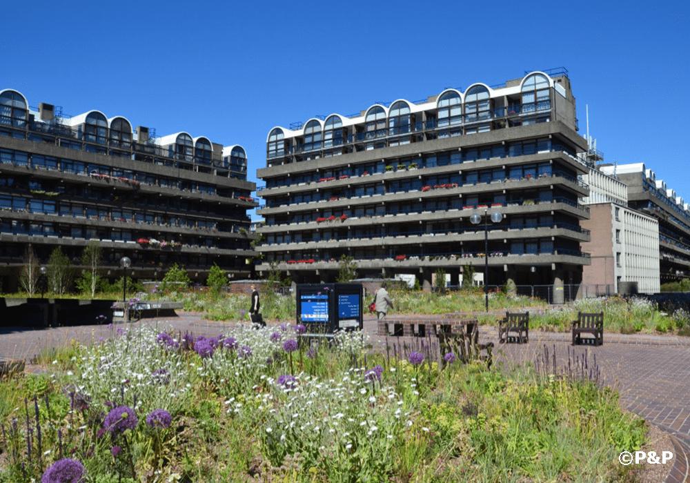 Image shows the award-winning Barbican Beech Gardens. P&P was the green infrastructure provider and installer. Planting includes Allium Globemaster, Achillea Terracotta, Verbena Bonariensis and Lychnis Coronaria Alba.