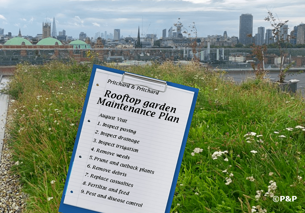 The image shows a roof terrace with a wild-flower meadow in Victoria London. A clip board shows a maintenance plan for a rooftop garden.
