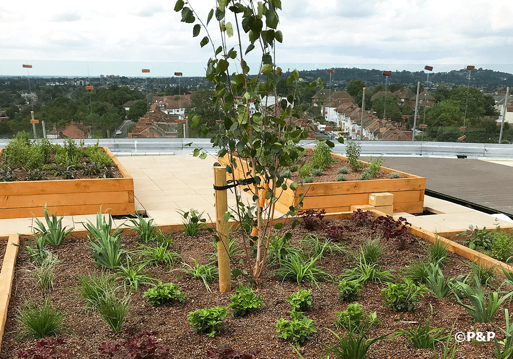 The image shows a newly planted roof terrace in Wembley, London.