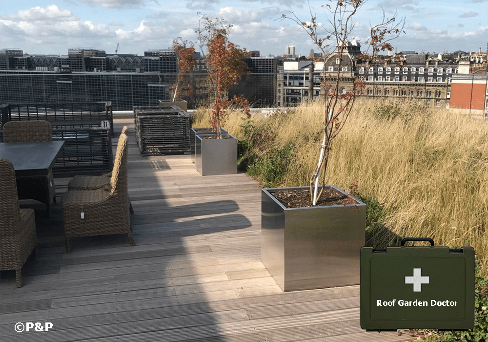 Image shows: a large roof terrace, with dead trees in pots, due to lack of water and a wild flower meadow that is in need of rejuvenation, if not reseeding, superimposed is an image of the P&P roof terrace doctor's bag over the top.