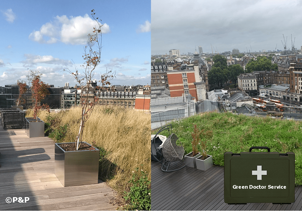 Two part image showing a London roof terrace one with healthy plants and meadow, one unhealthy.