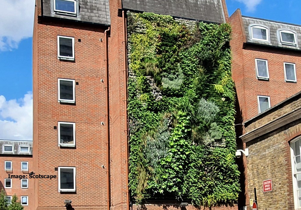 Biodiverse wall, London Bridge, has bird and pollinator-friendly plants and Bird boxes nestle among the plants.