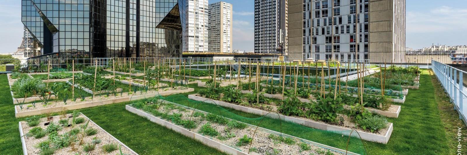 Urban roof top garden at Le Cordon Bleu Paris