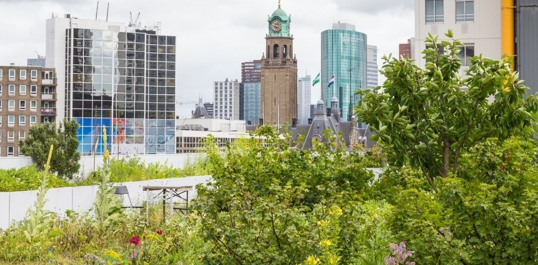 Example of Intensive green roof