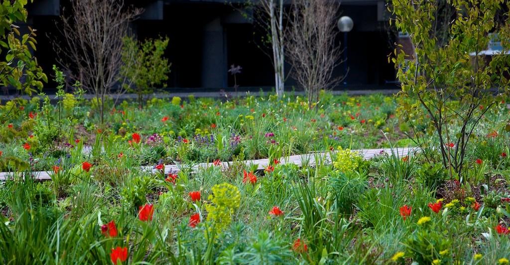 Nigel Dunnett Soft landscaping design at the Barbican
