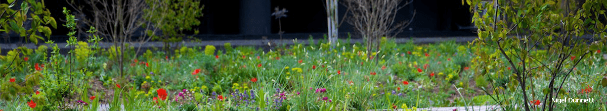 Header image shows: spring view diverse planting of the landscaped podiums at the Barbican Centre, London, planting by Nigel Dunnett, green infrastructure by P&P.