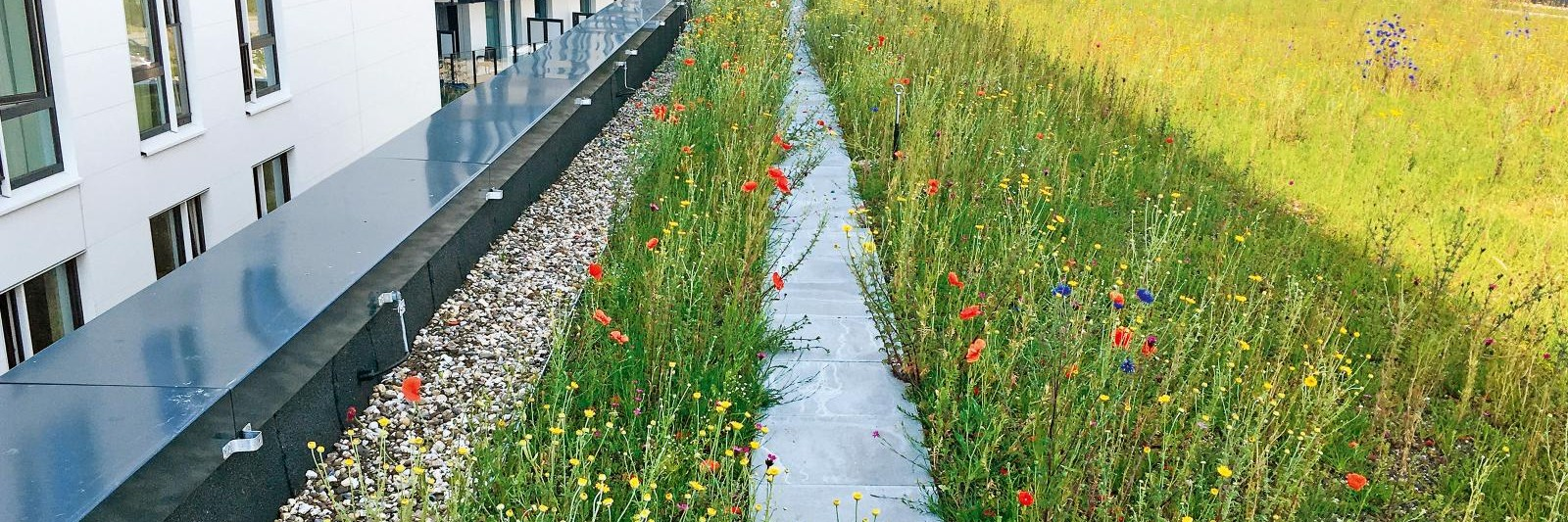 Wildflower Green Roof Zinco