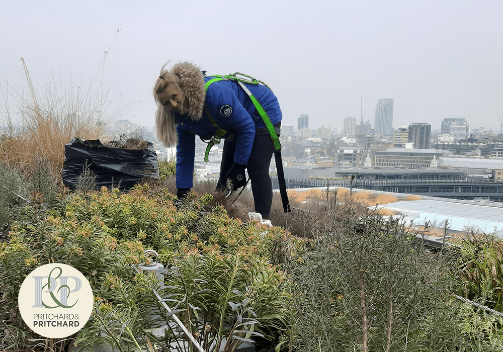 Viktoria Tsvetlanova – a female living roof and wall maintenance expert at Pritchard and Pritchard on pictured on top of a green roof in the City or London