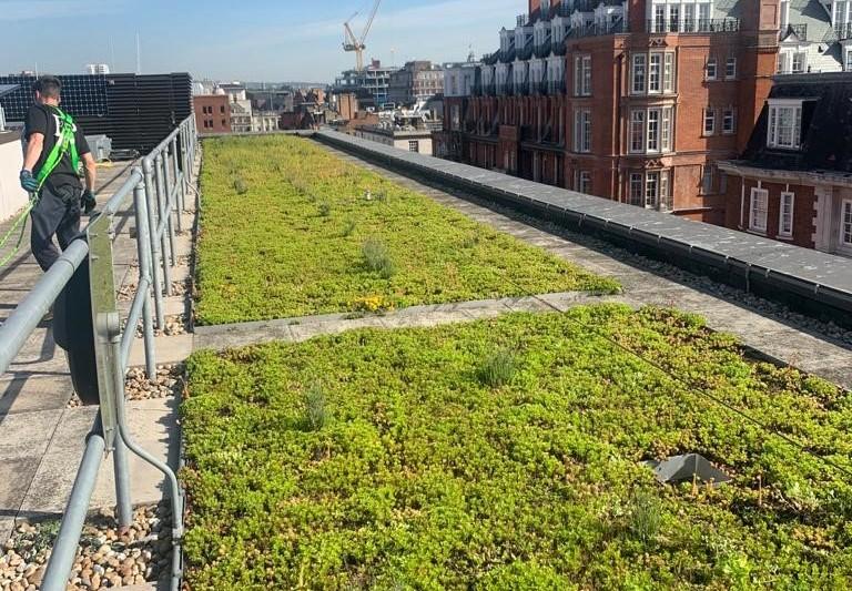 Green Roof Maintenance Grosvenor