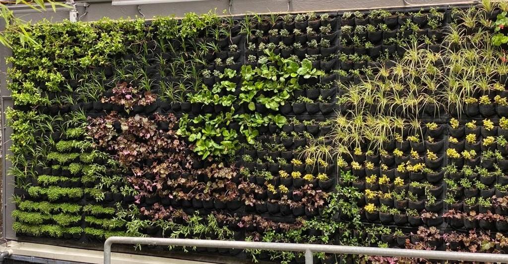Living Wall at City University