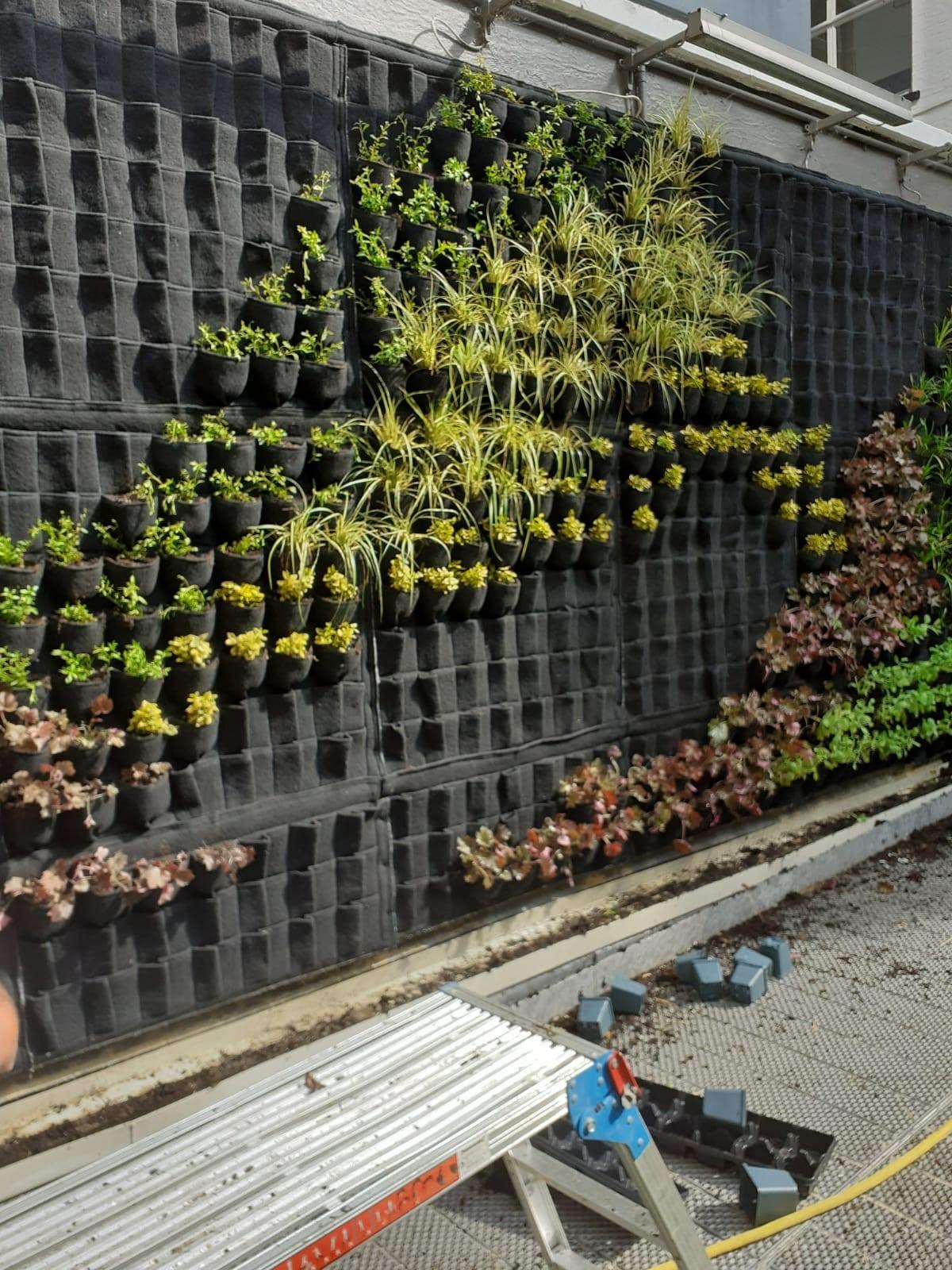 Green wall installation at City University