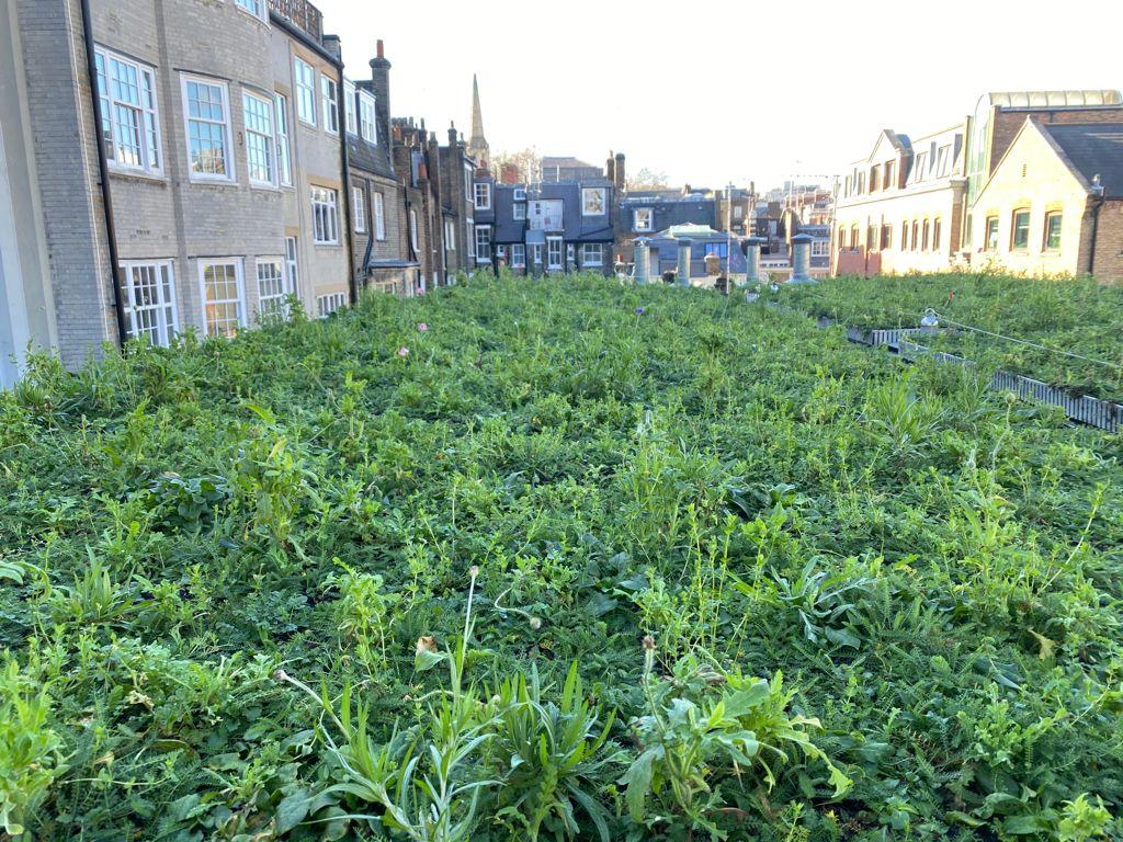 Wildflower Zinco Green Roof