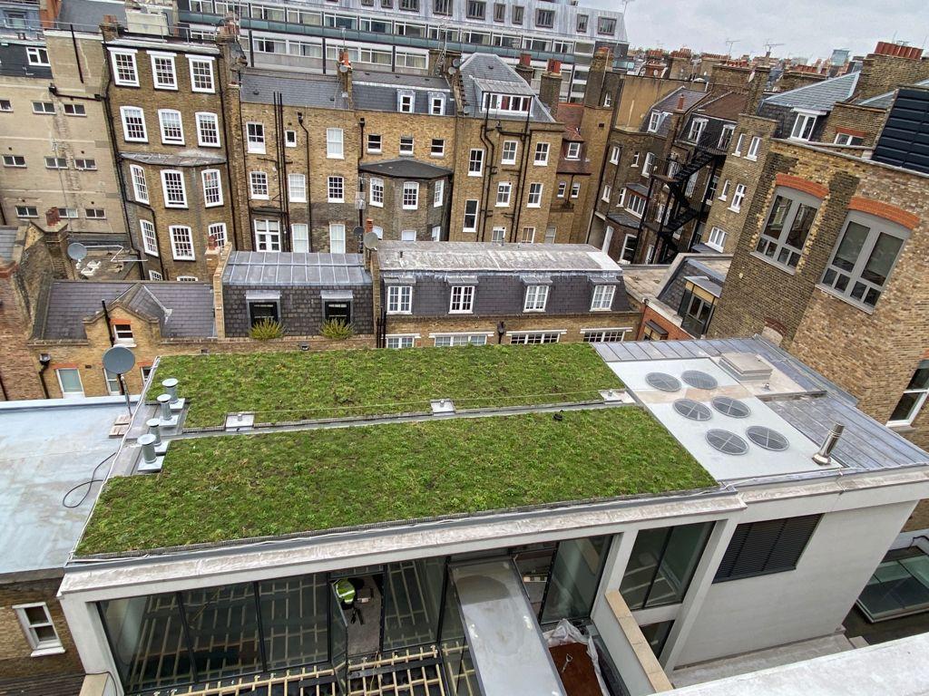 Bentinck Street Green Roof