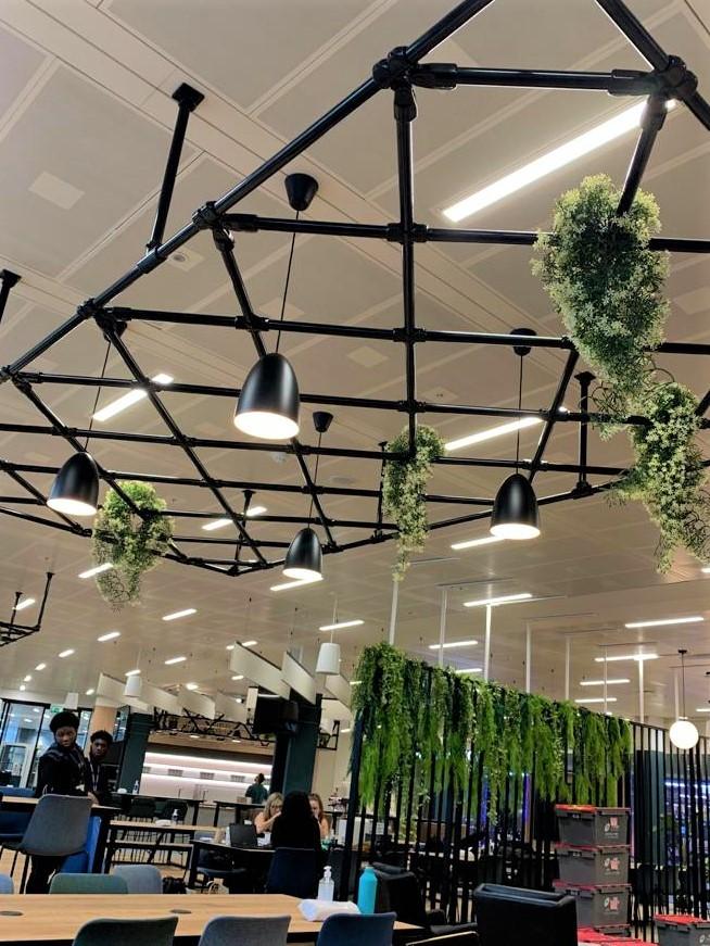 Interior Planting for Planteria at CBRE